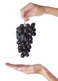 Mano y uvas Fotos de archivo libres de regalías