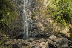 Manoa falls Royalty Free Stock Photos