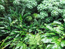 Manoa Falls Forest Royalty Free Stock Photography