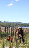 Manodopera agricola che tende la terra nel lago Batur Immagine Stock
