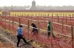 Manodopera agricola messicana a Washington Fotografie Stock Libere da Diritti