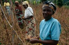 Manodopera agricola, Uganda Immagini Stock