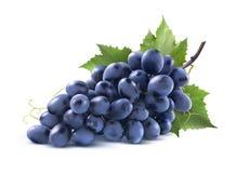 Manojo azul de las uvas con la hoja aislada en el fondo blanco Foto de archivo libre de regalías