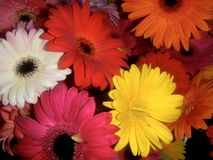 Manojo bonito de la flor Imagenes de archivo