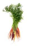 Manojo colorido de variedades clasificadas de zanahorias Foto de archivo libre de regalías