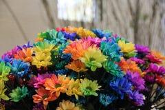 Manojo colorido del arco iris de crisantemos hermosos cerca para arriba Ramo del tiempo de primavera de chrysanths en la flor de  foto de archivo libre de regalías
