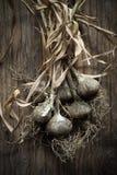 Manojo de ajo en la madera Imagen de archivo libre de regalías