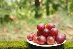 Manojo de bayas frescas de las uvas rojas en la placa blanca en el jardín con el fondo verde claro borroso Foto de archivo libre de regalías