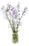 Manojo de bellflower de la campánula en el florero de cristal imagen de archivo libre de regalías