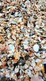 Manojo de cáscaras Foto de archivo libre de regalías