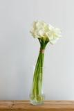 Manojo de calas en el florero Fotos de archivo