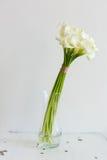 Manojo de calas en el florero Imagenes de archivo