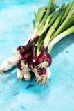 Manojo de cebollas rojas y blancas de la primavera Fotos de archivo