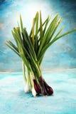 Manojo de cebollas rojas y blancas de la primavera Imagen de archivo libre de regalías