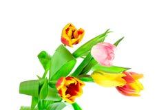 Manojo de cinco tulipanes Fotos de archivo