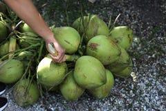 Manojo de cocos verdes Fotos de archivo libres de regalías