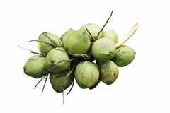 Manojo de cocos verdes frescos Imagenes de archivo