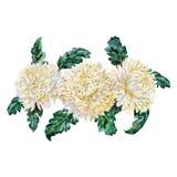Manojo de crisantemos blancos watercolor ilustración del vector