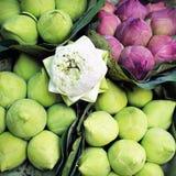 Manojo de flor de loto Imagen de archivo libre de regalías
