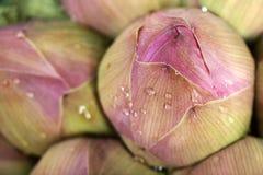 Manojo de flor de loto Foto de archivo libre de regalías