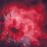 Manojo de flor roja del hibisco Imagen de archivo libre de regalías