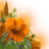 Manojo de flor roja del hibisco Fotografía de archivo libre de regalías