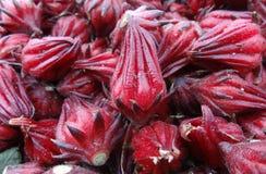 Manojo de flor roja de Jamaica fotos de archivo