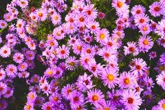Manojo de flores Fotos de archivo