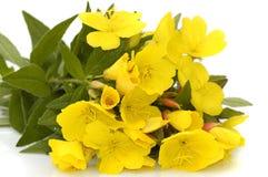 Manojo de flores Imagen de archivo libre de regalías