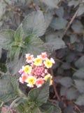 Manojo de flores Imagenes de archivo