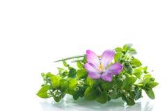 Manojo de flores con las azafranes Imagen de archivo libre de regalías