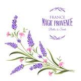 Manojo de flores de la lavanda ilustración del vector