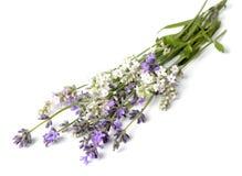 Manojo de flores de la lavanda en un blanco Fotografía de archivo libre de regalías