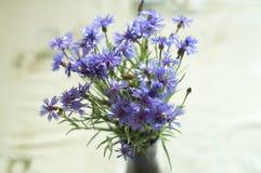 Manojo de flores del centaurea Foto de archivo libre de regalías