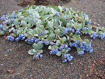 Manojo de flores en arena de la lava el enero Mayen imagenes de archivo