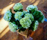 Manojo de flores de la hortensia foto de archivo libre de regalías