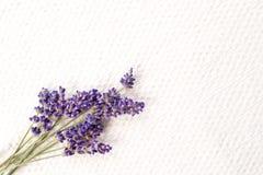 Manojo de flores púrpuras frescas de la lavanda en el fondo de lino texturizado blanco imagen de archivo libre de regalías