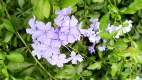 Manojo de flores salvajes Imagen de archivo