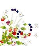 Manojo de flores y de bayas Imágenes de archivo libres de regalías