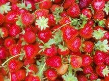 Manojo de fresas frescas fotografía de archivo