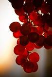 Manojo de fruta de la uva en la puesta del sol Fotografía de archivo