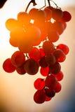 Manojo de fruta de la uva en la puesta del sol fotos de archivo