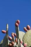 Manojo de frutas del cacto Fotos de archivo libres de regalías