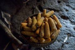 Manojo de granos dulces secados Imagen de archivo