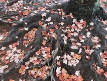 Manojo de hojas imagen de archivo libre de regalías