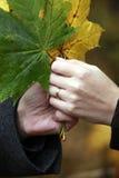 Manojo de hojas de arce Foto de archivo
