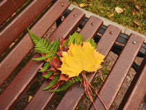 Manojo de hojas de arce del otoño en un banco de madera Imagenes de archivo