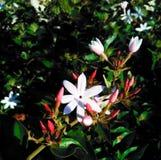 Manojo de la flor en jardín Fotos de archivo