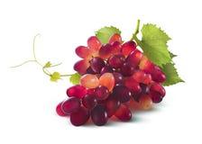 Manojo de las uvas rojas con la hoja aislada en el fondo blanco Foto de archivo