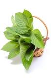 Manojo de menta verde fresca en cesta de mimbre en el fondo blanco Foto de archivo